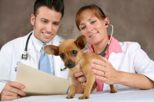 condition age veterinaire